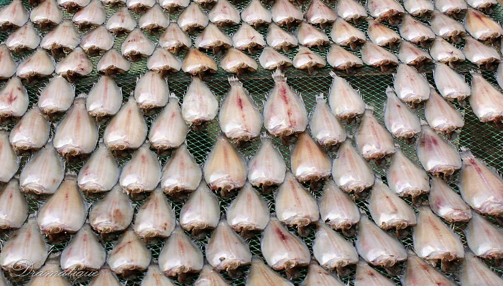 생선진열사진-바다생선