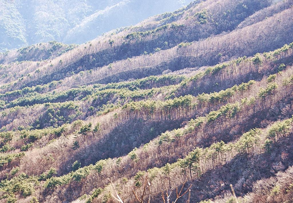 가지산의 산림