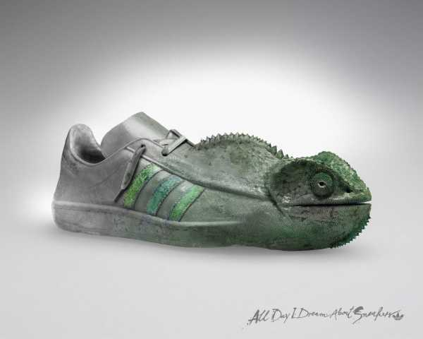 Chameleon Shoes Adidas