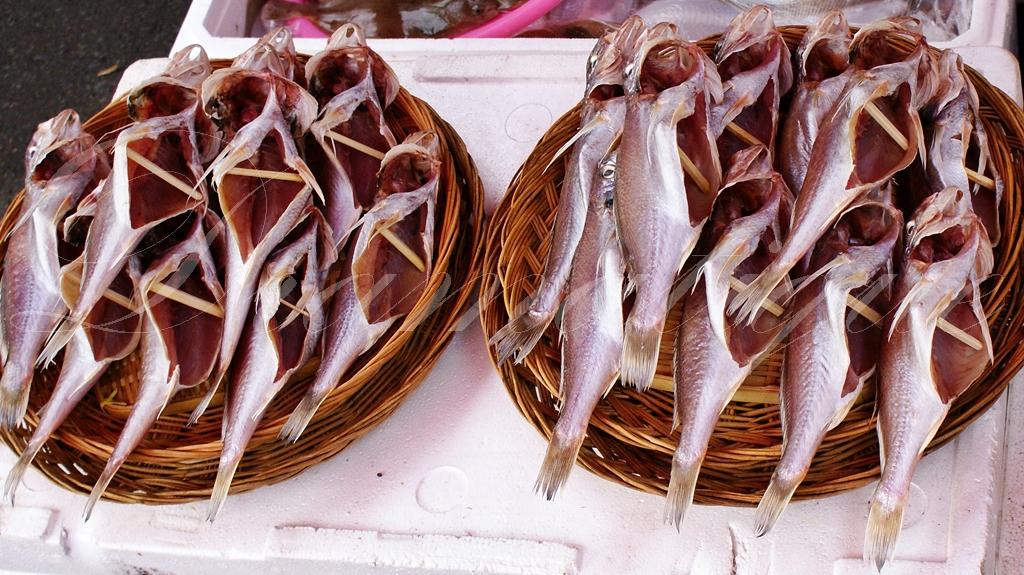생선사진-바다생선